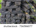 turf fossil fuel  drying in a... | Shutterstock . vector #736586077