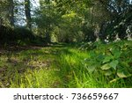 Rural Footpath With Green...