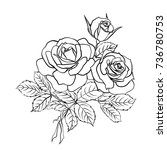 Stock vector rose sketch black outline on white background vector illustration 736780753