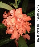 Small photo of Balsam Flower