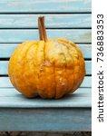 Pumpkins In The Garden  Autumn...