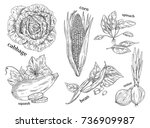set of isolated vegetables... | Shutterstock .eps vector #736909987