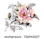 hand drawn watercolor pink... | Shutterstock . vector #736942027