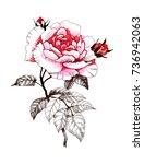 hand drawn watercolor pink...   Shutterstock . vector #736942063