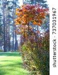 maple | Shutterstock . vector #737031967
