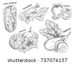 organic food sketches. hand... | Shutterstock .eps vector #737076157