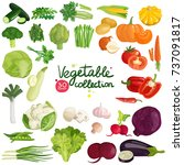 vegetables and herbs collection ... | Shutterstock .eps vector #737091817