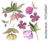 set of watercolor botanical... | Shutterstock . vector #737160067