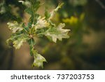 green leaves of a tree. autumn