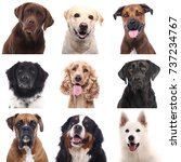 beautiful dogs | Shutterstock . vector #737234767