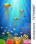 jellyfish swim in the... | Shutterstock . vector #737348887