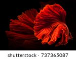 red siamese fighting fish ... | Shutterstock . vector #737365087