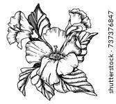 vector hibiscus  flowers. black ... | Shutterstock .eps vector #737376847