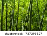 lanscape of bamboo tree in... | Shutterstock . vector #737399527