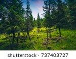 forest walk | Shutterstock . vector #737403727