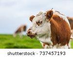 the cow's portrait | Shutterstock . vector #737457193