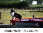 australian shepherd | Shutterstock . vector #737532397