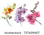 pink  yellow  purple orchid... | Shutterstock . vector #737609407