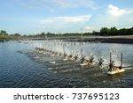 shrimp pond | Shutterstock . vector #737695123