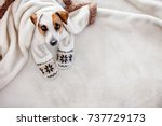 Stock photo dog under a plaid pet warms under a blanket in cold autumn weather puppy in slippers 737729173