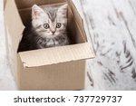 curious gray kitten in... | Shutterstock . vector #737729737