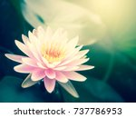 beautiful lotus flower  lily... | Shutterstock . vector #737786953