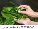 Woman Washing Spinach In Sink....