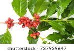 coffee cherry isolate on white... | Shutterstock . vector #737939647