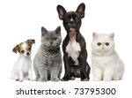 Stock photo group of dogs and cats in front of white background 73795300