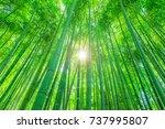 bamboo forest | Shutterstock . vector #737995807