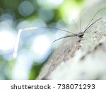 Small photo of Spider-Man is a creature that arthropods. As well as insects, millipedes, crabs, etc. rated Araneae with bokeh background
