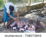 bagan  myanmar  sep 06   a pig... | Shutterstock . vector #738073843