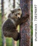 cub of brown bear climb on the... | Shutterstock . vector #738198697