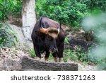 bos gaurus in nature | Shutterstock . vector #738371263