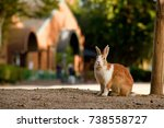 Stock photo cute wild bunny rabbits in japan s rabbit island okunoshima 738558727
