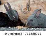 Stock photo cute wild bunny rabbits in japan s rabbit island okunoshima 738558733