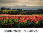The Lighthouse Beyond The Tulips