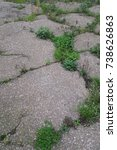 Small photo of Damaged and cracked concrete with green weeds growing in cracks.