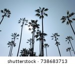palm trees in sunshine | Shutterstock . vector #738683713