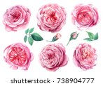 set of flower roses  leaves and ... | Shutterstock . vector #738904777