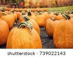 Pumpkins For Sale At A Pumpkin...