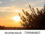 olive tree silhouette at sunset.... | Shutterstock . vector #739084807