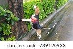 beagle climb the tree | Shutterstock . vector #739120933