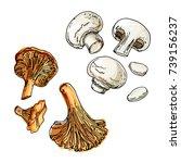 edible mushrooms. champignons... | Shutterstock .eps vector #739156237