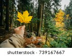 yellow maple leaf in a man hand ... | Shutterstock . vector #739167667