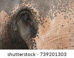 elephants in thailand   Shutterstock . vector #739201303