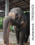 elephants in thailand   Shutterstock . vector #739201423