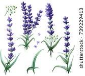 wildflower lavender flower...   Shutterstock . vector #739229413