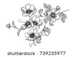 Stock vector flowers drawing with line art on white backgrounds 739235977