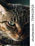 tabby cat portrait  close up... | Shutterstock . vector #739412923
